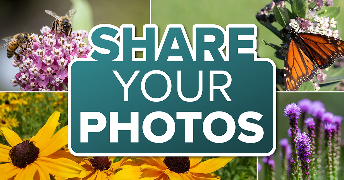 Share Your Photos, images of flowers, butterfly and bee